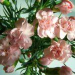 母の日に贈る花ってカーネーション以外にもあるの?人気の種類は?