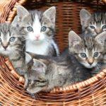 都内の猫カフェ8選 癒しの時間を過ごせる人気の猫カフェはどこ?