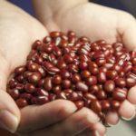 小豆で痩せるの!?小豆水のレシピとダイエット方法