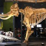 国立科学博物館特別展「大哺乳類展2ーみんなの生き残り作戦」に行ってきました。